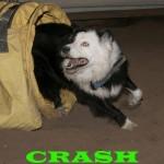 Crash1 (1)