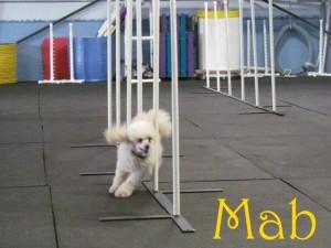 Mab2 (1)