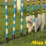 Miss Pixie1 (1)