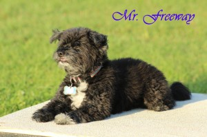 Mr. Freeway1 (1)