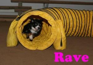 Rave1 (1)