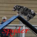 Spyder_frame1 (1)