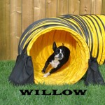 Willow1 (1)