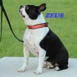 Zeus3 (1)