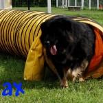 max_tunnel2 (1)